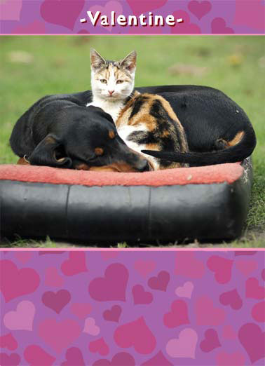 Funny Valentine's Day Card Love A cat cuddling with a dog | dog cat valentine valentine's day heart hearts love around dachshund calico , I love it when you're around me