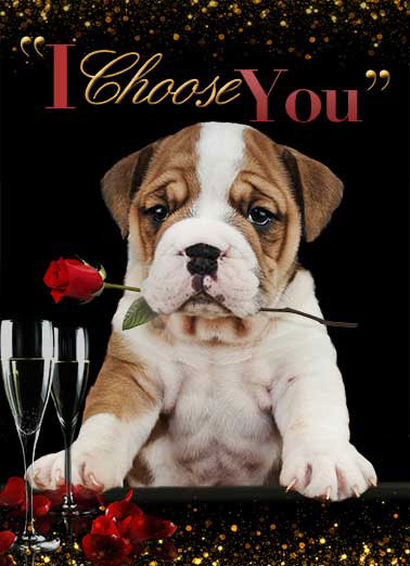 Bachelor Dog Funny Just for Fun Card  Puppy bachelor card | bulldog, funny, dog, cute, english, bachelor, bachelorette, rose, choosing, choose  (blank inside)