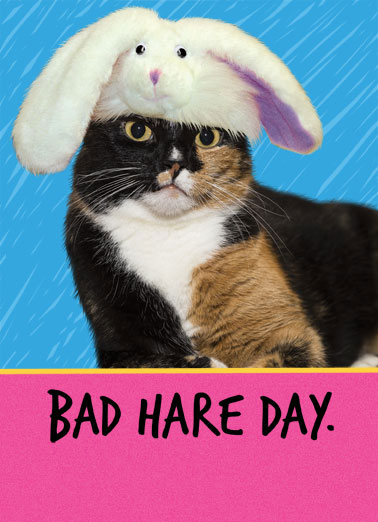 Bad Hare Day Funny 5x7 greeting Card Funny Animals Wishing you only good things at Easter!  | funny Easter bunny cat angry hat Bad Hare Day  Wishing you only good things at Easter!