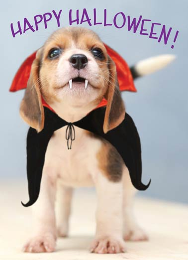 Barkula Funny Halloween Card  Cute puppy dressed as vampire dracula on a Halloween greeting card. | dog, puppy, puppies, beagle, cute, adorable, squee, awww,  From Count Barkula!