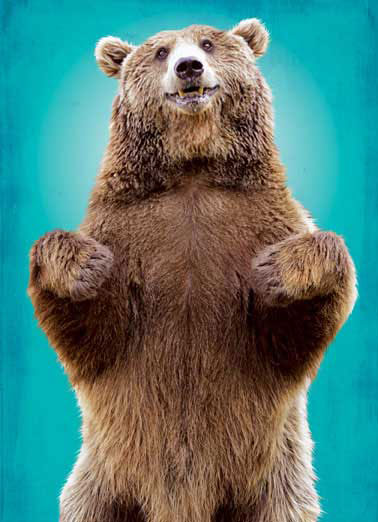 Bear Hug Funny 5x7 greeting  Funny Animals Here's a Big Bear Hug to let you know how much you're missed. | miss you, miss, greeting card, card, cards, bear, grizzly, griz, grizzly bear, black bear, bears, kodiak bear, kodiak, brown bear, funny bear, cute bear,  Here's a Big Bear Hug to let you know how much you're missed.
