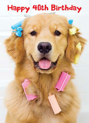 Beautiful 40 Funny Birthday 40th A Golden Retriever Wearing Multicolored Curlers