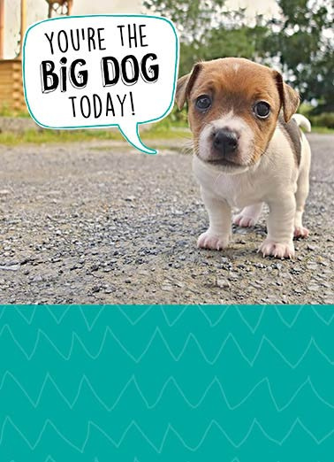 Big Dog Funny For Kid Card  Big, Dog, Cute, Puppy  Word on the street is it's your Birthday!