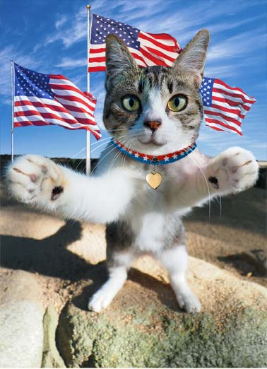 Big Hug (4) Funny Cats Card  A picture of a cat in front of American flags preparing to give a hug. | cat hug flag american wave sweet cute color stars stripes 4th of July fireworks bbq  Sending you a Big July 4th hug!