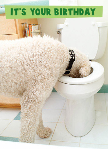 Funny Birthday Card Partying Toilet, Funny, Dog,  Treat yourself to the BIGGEST DRINK you can find!