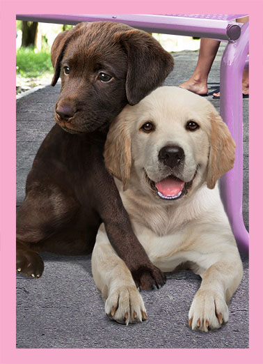 Mother's Day Hug Funny Mother's Day  For Any Mom two dogs hugging, sweet labradors.  Sending you a big loving Mother's Day hug!