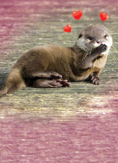 Funny Valentine's Day   An otter blowing a kiss | otter kiss blow heart hearts animal cute animal , blowing you an otterly big valentine's day kiss