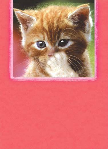 Blowing Kiss (VAL) Funny Cats Card  A cat blows a kiss | blow kiss cat kitten love heart hearts valentine valentine's day big  blowing you a big valentine's day kiss