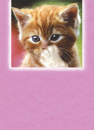 Funny Cats Card  ,  Blowing you a Big Happy Birthday Kiss!