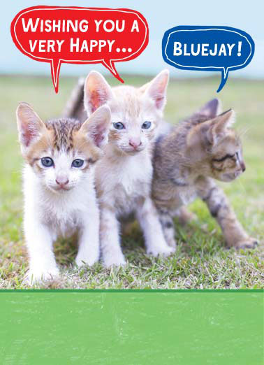 Bluejay Attention Funny Birthday Card Cats Bluejay attention birthday happy wishing cat kitten kittens  Hope you get all the attention on your Birthday!
