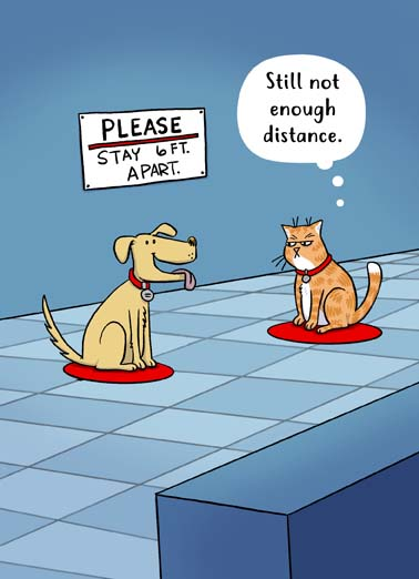 Cat Dog Social Distance Funny Dogs Card Cats Funny cat and dog social distancing on cartoon birthday card, say happy birthday with this funny card featuring a cat and dog social distancing, funny cat and dog covid-19 social distancing birthday card, Happy Birthday to someone I wish was a whole lot closer.