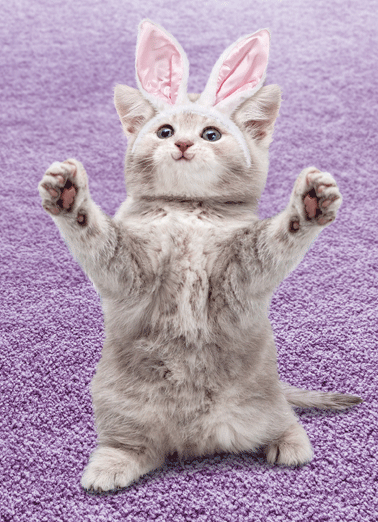 Cat Hug Easter Funny 5x7 greeting Card Hug Sending you a big Happy Easter hug! | Easter cat bunny ears cute furry sweet nice cuddly rabbit kitty hug Sending you a big Happy Easter hug!