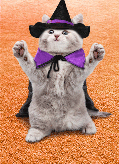 Cat Hug Hal Funny Halloween Card   Sending you a big Happy Halloween hug! | cat kitten witch costume funny silly card greeting sweet nice   Sending you a big Happy Halloween hug!