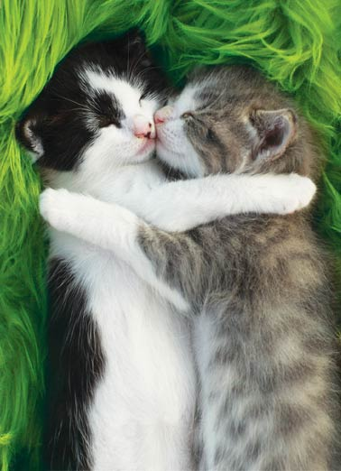 Cat Hug St Pat Funny St. Patrick's Day Card  Hugging Cats St. Patrick's Day Wish  Sending you a little Irish hug and kiss today! Happy St. Patrick's Day