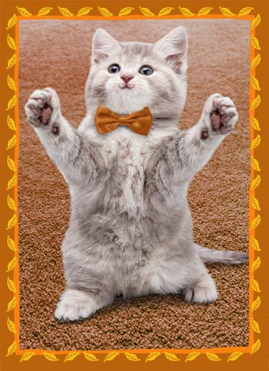 "Cat Hug Thanksgiving Funny Thanksgiving  Cats Picture of a cat wearing a bowtie with their arms out for a hug. | hug arm bowtie happy thanksgiving smile happy turkey pie dinner feast leaf leaves Sending you a big ""Happy Thanksgiving"" hug."