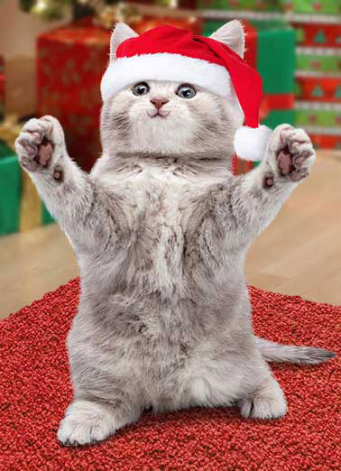 Funny Animals Ecards Christmas Funny Ecards Free Printout Included