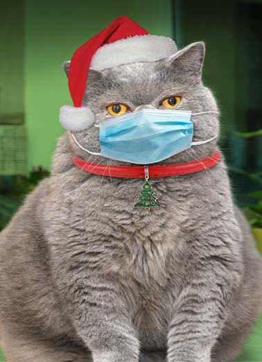 "Cat in Mask Funny Christmas  Cats  ""Mmffy Chrmsfmas!"""
