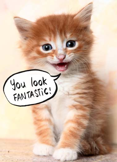 "Cat Scan Funny Cute Animals  Funny Sweet Picture of a cat saying 'You're Fabulous'. | cat fantastic happy birthday fabulous scan ""A quick cat scan shows you haven't aged a bit!"""
