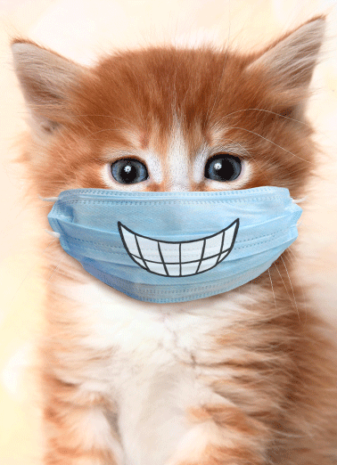 Cat Wearing Mask  Funny Animals  Birthday   Put on a big smile, your birthday is here!