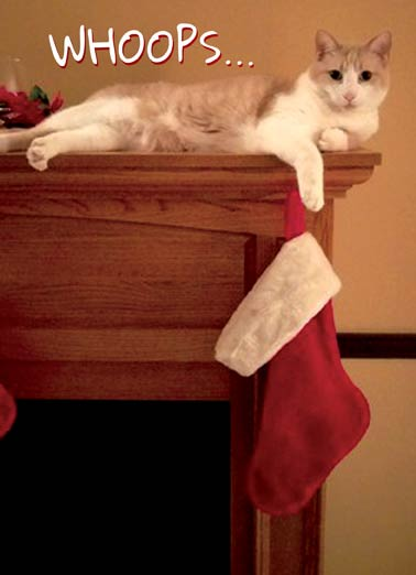 "Cat Whoops Funny Christmas Card Cartoons Cat sitting on mantel knocking christmas stocking off | xmas, kitten, lolcat, lol, meme, haha,  "" The stockings WERE hung by the chimney with care..."""