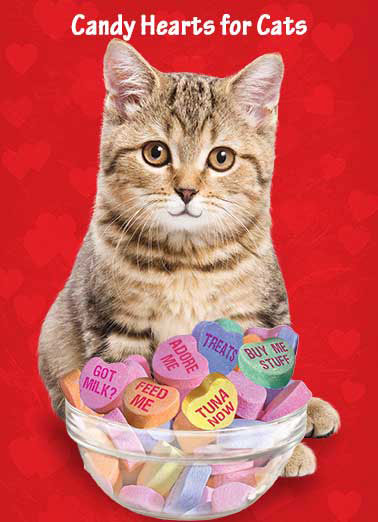 Cat's Candy Hearts Funny Kevin Card Valentine's Day Cat with a bowl of candy hearts | cute animal cat candy heart hearts valentine valentine's day love red tuna treat feed   Happy Valentine's Day