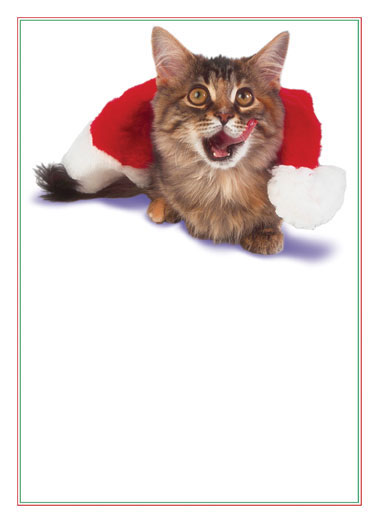 Christmas Cat Funny Christmas Card Cats Cat licking it's lips after eating the partridge in the pear tree.