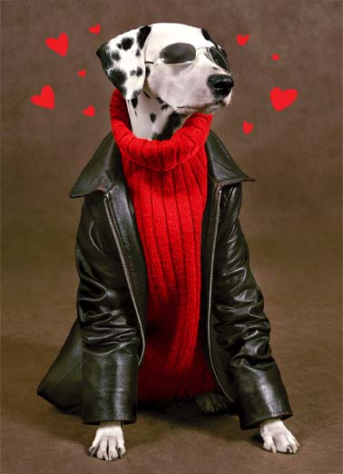 Cool Dude VAL Funny Valentine's Day  Dogs A picture of a dog wearing a sweater, sunglasses, and a leather jacket- with hearts all around him. | cool dog dude valentine day happy heart sunglasses jacket leather sweater Happy Valentine's Day to one cool dude!