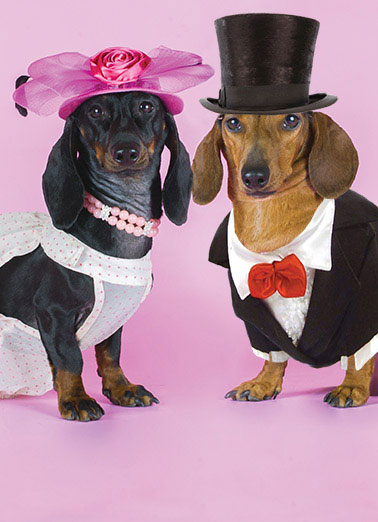 Dachshund Couple Funny Anniversary   A wienerful Anniversary card | heart, hearts, love, adorable, sweet, rose, flowers, photo, image, romantic, love, kisses, kiss, boyfriend, girlfriend, husband, wife, spouse, significant other, lover, bae, red, happy, picture, expression, greeting card, sweet, loving, for her, for him, goofy, hilarious, witty, print, folded card, mail, recipient, , special, wonderful, humor, warm, message, fresh, cute, friend, son, to, for, family, fun, real cards, printed, whimsical, heart-warming, heart warming, sentimental, from the heart, wish, wishes, note, greetings, anniversary, happy anniversary, weiner dog, wiener dog, weiner, wiener, dachshund, dutch hound, dog, dogs in costumes, dog costume, dogs costume, wedding, wedding dress, dog in a dress, dog dress, dog wedding dress, tux, tuxedo, dog tux, dog tuxedo, wedding dog, dog in a tux, dog in a tuxedo, dog in tux, dog in tuxedo   Here's to another weinerful year together!