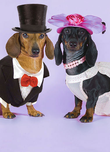 Dachshund Wedding Funny Dogs Card  Dog, Wedding, Dachshunds, Wieners, Dogs, Marriage, Cute, Funny, LOL, Cards, Tuxedo, Bride, Groom, Dachshunds getting married, Dachsund Here's to a truly Wienerful couple! Congratulations