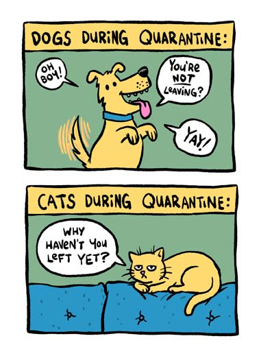 Dog Cat Quarantine Funny Quarantine Card Cartoons How dogs and cats react during the coronavirus quarantine, say happy birthday with this funny dog and cat coronavirus quarantine greeting card, the perfect birthday card for the dog or cat lover during the coronavirus quarantine, Happy Quarantine Birthday