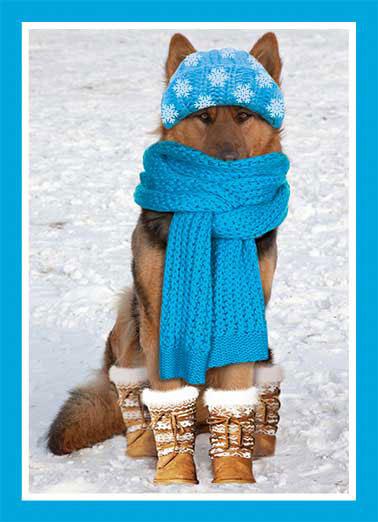 dog christmas scarf funny dogs - Funny Dog Christmas Cards