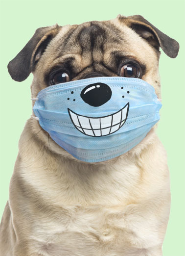 Dog Wearing Mask FD Funny Dogs  Funny   Hope you're smiling big on Father's Day