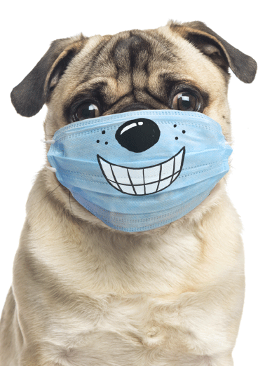 Dog Wearing Mask Funny Megan Card Dogs Send someone a personalized greeting card for their birthday! | social distancing quarantine happy another year older shelter in place funny dog mask smile  Hope your birthday finds you with a big smile on your face!