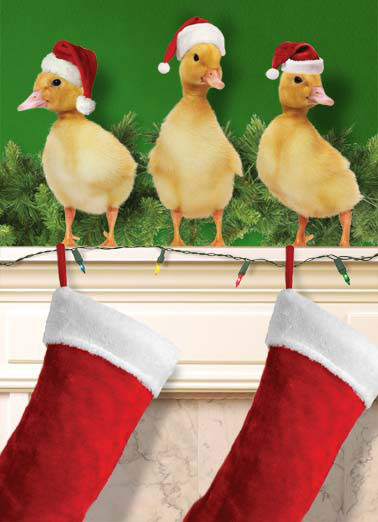 Duck the Halls Funny Christmas   Duckings standing over stockings on a mantle | duck halls mantle christmas stockings lights stocking santa cap hat cute fireplace garland animal  Christmas is Here! Duck the Halls!