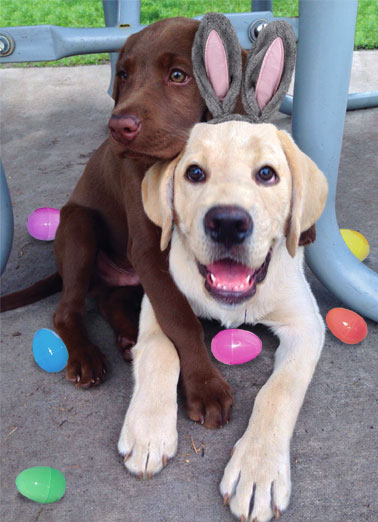 Easter hug Funny Easter  Dogs Dog's hugging each other | hug day love warm loving dog dogs lab labrador big easter bunny eggs Sending you a Big Loving Easter Hug!