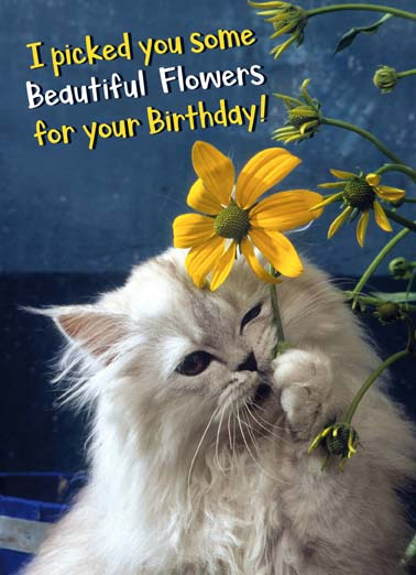 Eated Them Funny Birthday Card Funny Animals Cat ate flowers on funny birthday card, say happy birthday with this funny card with a cat who ate flowers, perfect birthday for the cat lover Then I eated them.