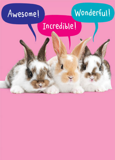 Every Bunny Funny 5x7 greeting Card Funny Animals Three bunnies telling you how great you are. | bunny rabbit awesome incredible wonderful easter egg eggs basket Everybunny thinks you're terrific!