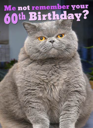 Fat Chance 60th Funny Birthday Card 60th Birthday fat cat not remember your 60th birthday greeting card | FAT CHANCE