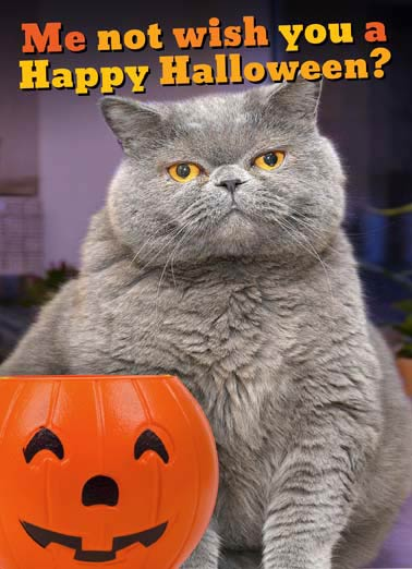 Fat Chance Halloween Funny Halloween Card Fat Cat Loves Candy | Halloween,  Pets, Humor