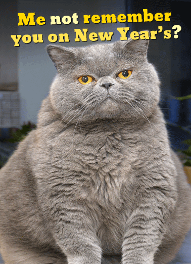 Fat Chance New Year Funny Cats     Fat Chance!