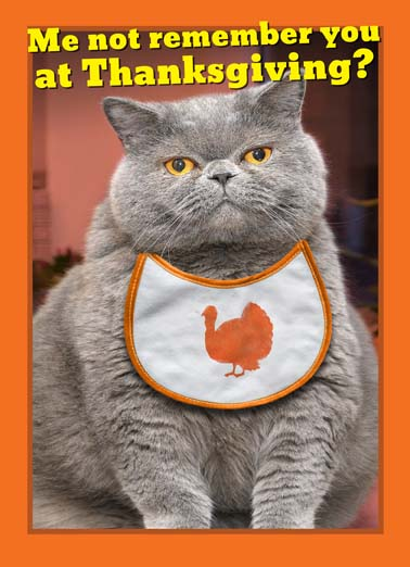 Fat Chance Thanksgiving Funny Thanksgiving  Cats Fat cat wearing a turkey bib on thanksgiving wishing you a happy thanksgiving,  there is no way this fat cat would not remember you at thanksgiving, the perfect thanksgiving greeting card for the cat lover, say happy thanksgiving with this funny card with a fat cat FAT CHANCE!