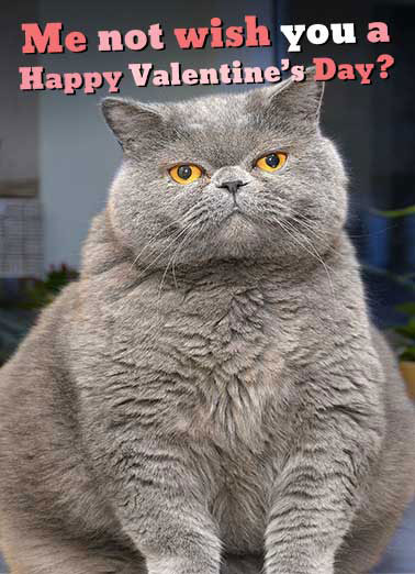 Fat Chance Val  Funny Animals Card Valentine's Day   FAT CHANCE!