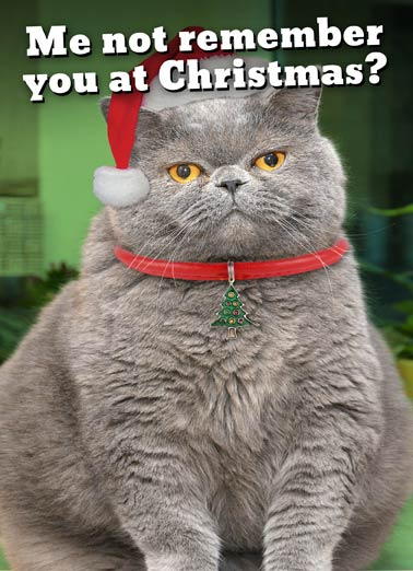 Fat Chance Christmas Funny Christmas Card Cats Fat Cat wearing santa hat on christmas greeting card | claus, claws, xmas, yule, yuletide, winter, wonder, kitten, kitty, pet, furry, fur, fuzzy, merry, happy, funny, joke, lol, meme, lolz, haha, ha,  FAT CHANCE!