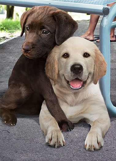 Father's Day Hug Funny Love   A picture of a chocolate labrador hugging another labrador. | chocolate labrador lab dog k9 k-9 canine hug dad father father's day big loving  Sending you a Big Loving Father's Day hug!