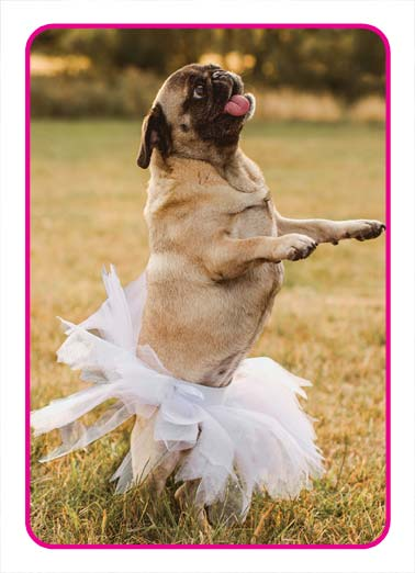 For Words Funny Birthday Card  Picture of a pug in a tutu. | pug dog tutu words word wonderful happy birthday  You're tutu wonderful for words!