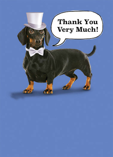 "Very Much Funny 5x7 greeting Card  thanks thank you top hat bow tie dachshund hotdog dog puppy wiener formal   Just my way of formally saying ""Thanks!"""