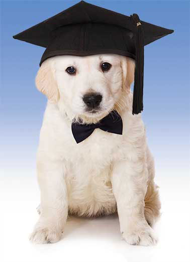 Graduation Puppy Funny Megan Card   Just a formal note to congratulate you on your Graduation
