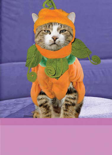 Frickin Cat Funny Halloween Card  A picture of an angry cat wearing a pumpkin costume. | halloween cat feline costume angry mad candy scary pet  Yeah... Happy Frickin' Halloween.