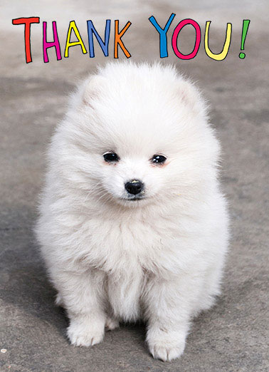 Funny  Card  dog puppy thanks thank you cute ,  I'm furever grateful!