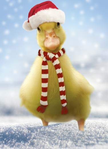 Fuzzy XMAS Funny Cute Animals Card Christmas Picture of a duckling with a santa hat and scarf. | merry Christmas wish duck duckling santa hat scarf tree presents present wish warm   Sending you warm and fuzzy wishes for a very merry christmas!
